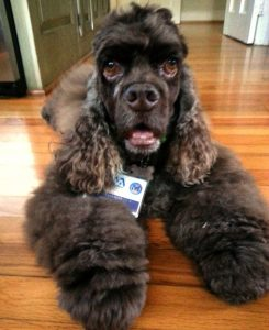 Tann Mann donned his therapy dog proudly and loved going to work at the VA.