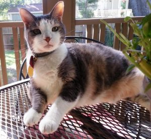 Chutney Cat fell in love with country life on James Island and especially loved sunning on the screened porch.
